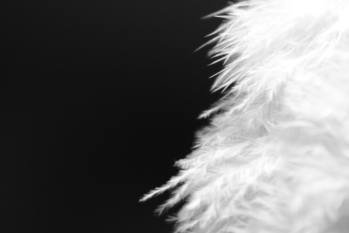 02-la-paloma-blanca
