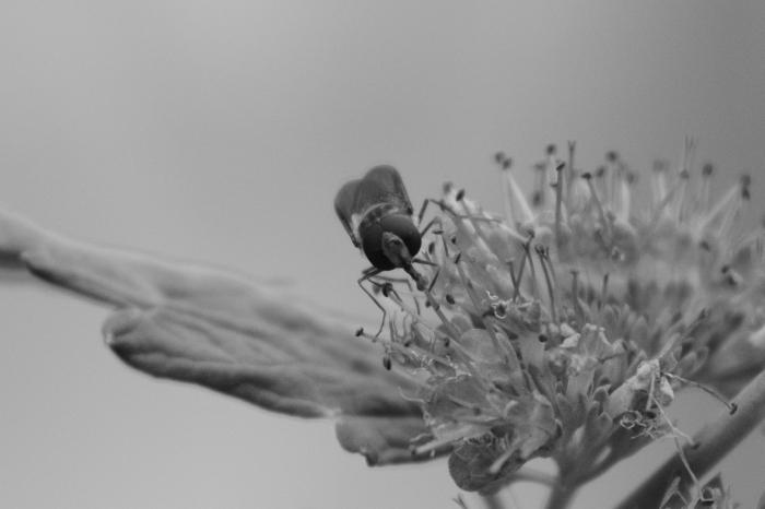08-la-cucaracha